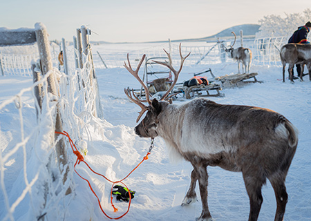 INCENTIVE; SWEDISH LAPLAND; 20 PAX